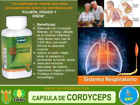 cordiceps sinensis tiens